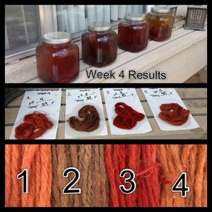 Madder Project Week 4 Results.jpg